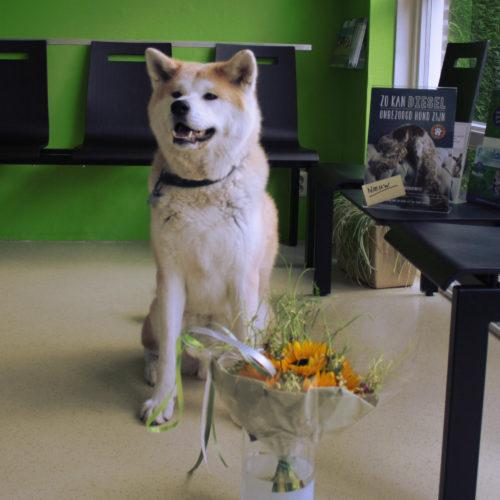 Shiro is de eerste die het Huisdier ZorgPlan volgt